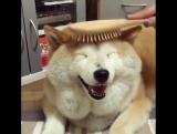 Когда ты пес, но все равно хочешь себе красивую прическу!)