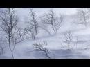 Зимняя вьюга - ветер зимой. Идеальный фоновый звук