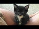 За спасение котёнка он отдал всю свою зарплату…