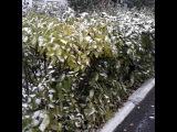 Первый снег выпал в Лисаковске