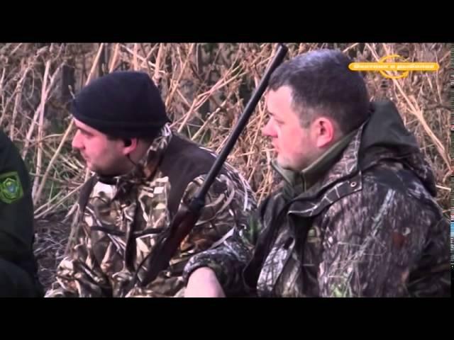 Охота на фазана и зайца с легавыми Охотничьи истории j[jnf yf afpfyf b pfqwf c ktufdsvb j[jnybxmb bcnjhbb