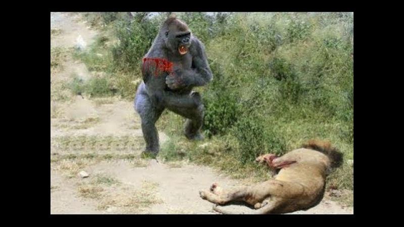 Khoảng Khắc hiếm gặp trong thế giới động vật Bạn sẽ không thấy lần 2