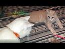 Продолжение истории о парализованном котёнке Восходе kitten survived after injury Спасение