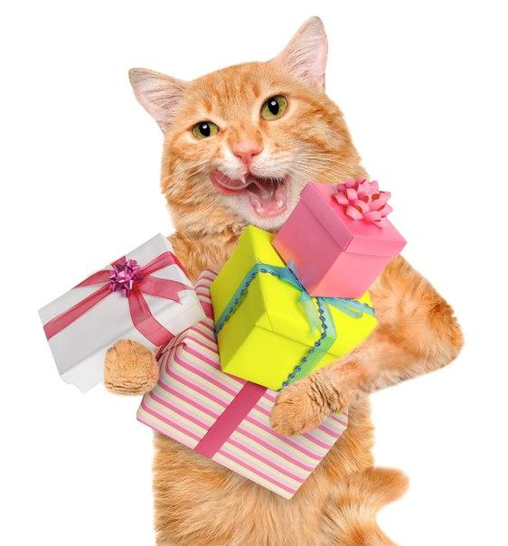 Картинки подарок для кошки