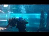 Плавание с аквалангом.