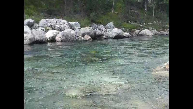 Проведите три минуты на берегу чистейшей Уральской реки, полной уникальной рыбы хариус (его видно в конце второй минуты)!