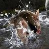 Рыбалка - учимся рыбачить вместе