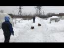 Управление жестом парой немецких овчарок...
