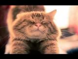Ахах, самый смешной кот, что же он делает)