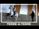 Тер-а-тер на школьной лошади