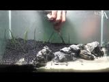 Aquascaping Lab - Tutorial Iwagumi Aquarium Desert Island Beach (size 40x25x25H 25L) rocks plants