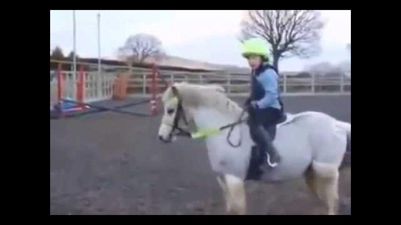 мерзкий мелкий пони