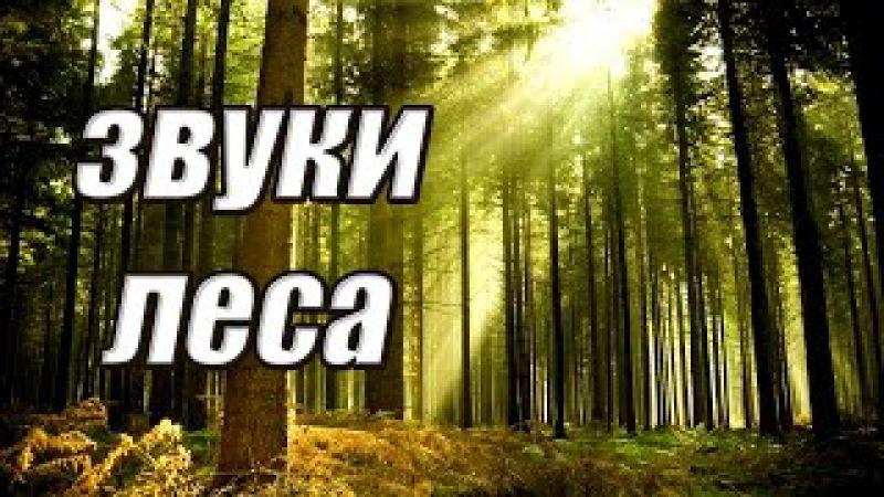 ЖИВАЯ ПРИРОДА. ЗВУКИ ЛЕСА......the sounds of the forest