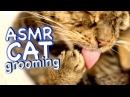 ASMR Cat Grooming 34
