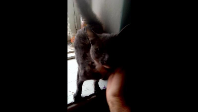 Молоденькая кошечка ищет любящих хозяев.