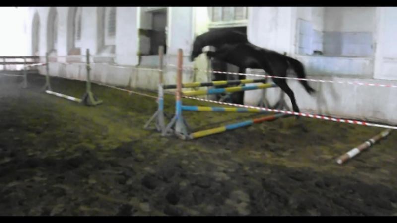 Дублерша (Барон-Дворянка)кобыла русской верховой породы 2014 г.р.
