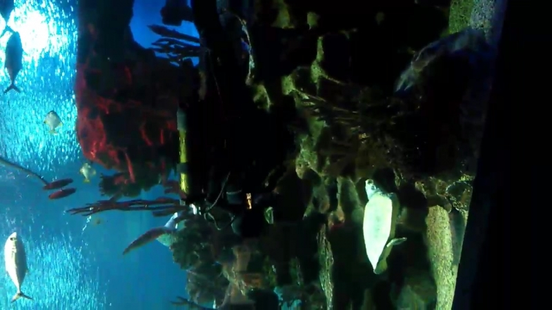 Океанариум Санкт Петербург