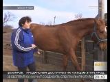 Потомственная казачка из Ейского района выращивает и дрессирует лошадей