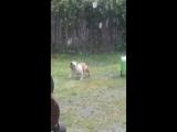 Собакен любит гулять под дождем