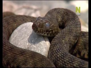 Про наших змеек ( Познавательный фильм)