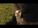 Белка и таинственные бродячие собаки