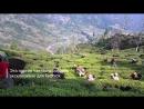 Утончённый белый чай первого сбора с плантации Мим в Даржилинге