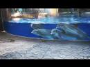 Дельфины наблюдают за белками