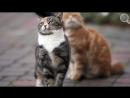 Сколько и как спят кошки - Интересные факты про кошек - Забавные, смешные