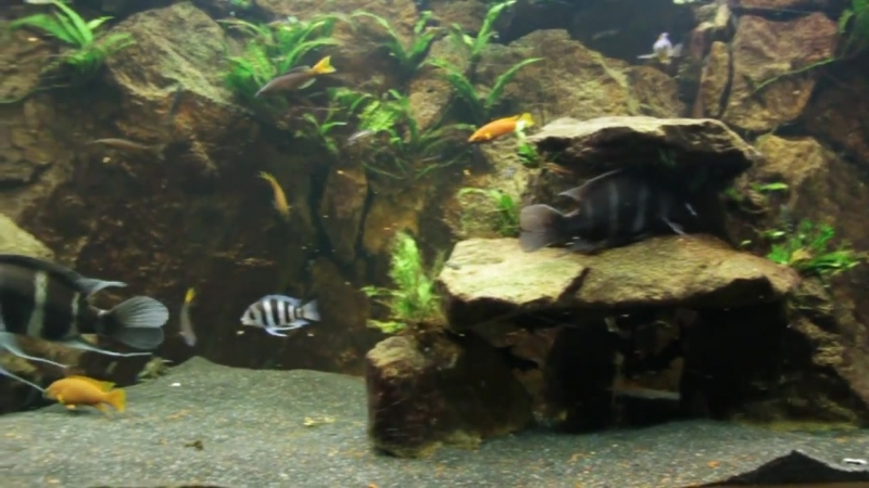 240G Lake Tanganyika tank with Frontosa