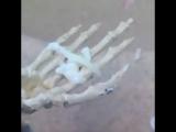 Порно со скелетами