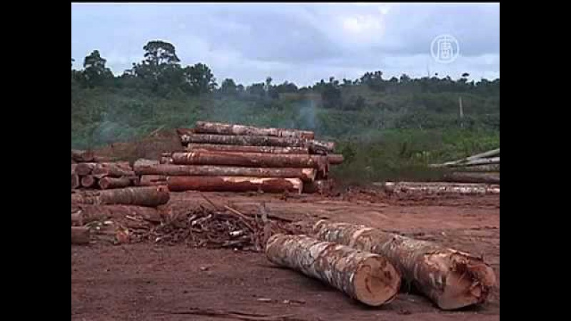 Леса Амазонки вырубают с пугающей скоростью (новости)
