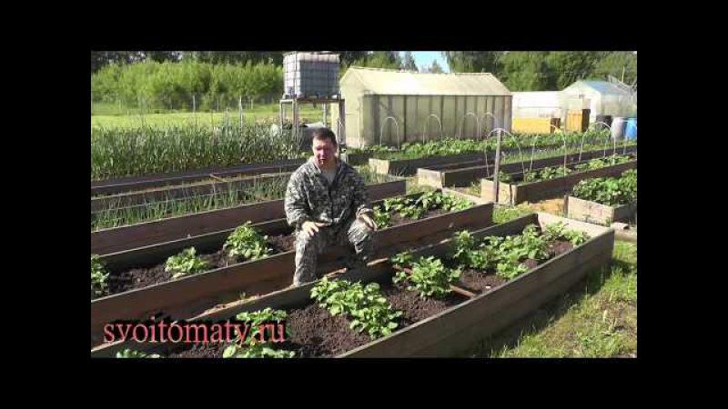 Как не наделать ошибок в природном земледелии