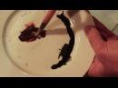 Видео-урок по китайской живописи гохуа с Вячеславом Синкевичем тема Бабочка