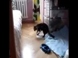 Кот ест коноплю. Последствия - YouTube