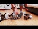Смешные видео про кошек июнь 2017