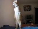 Кот встал по стойке СМИРНО во время воздушной тревоги в Израиле