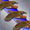 Птицы города Курска