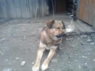 Наш пёс Рекс