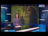 Медведи дважды за сутки вышли к людям в Новосибирской области