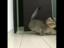 Happy Cats - Cutest video youll watch today! ❤️(640p) (1)