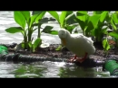 An Island Paradise - Sri Lanka