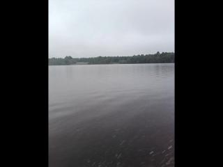 поездка за грибами д. Холм Архангельская область.