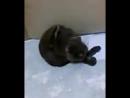 как коты моют жопк