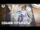 История Леры На что способны собаки когда врачи бессильны