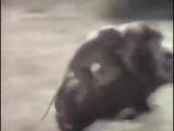 Аяяй обезьянки темку кинулм