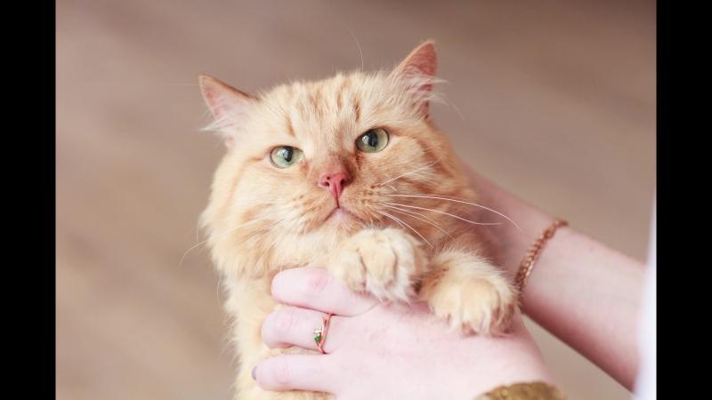 Возрастные котики от Meow gallery