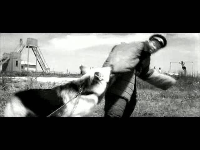 Проверка собаки на преобладающую реакцию и выстрел при закупке собак служебных пород в СССР