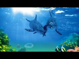 Поющие дельфины и киты Звуковая терапия Атмосфера подводного погружения Singing dolphins and whales