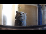 Aaron's Animals - Prince Michael With GoPro New Video Compilation