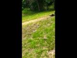 Snake Anaconda tries to drown my dog